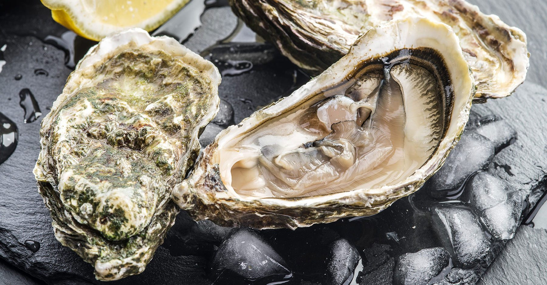 Bordeaux oysters discovery