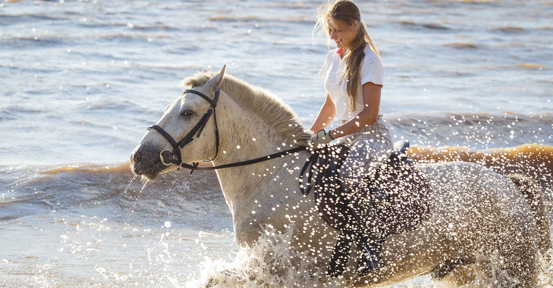 a horse in water